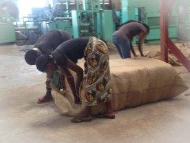 Her syr de igjen posen med 200kg bomull. En slik pose koster 1.2 mill tsh (5000kr)