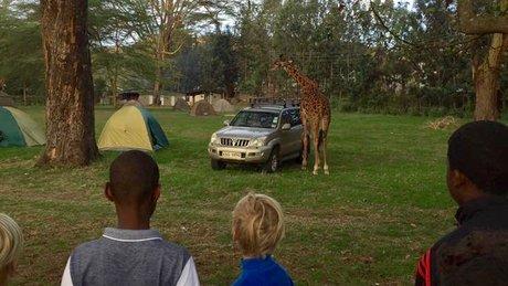 giraff-og-bil-1_full